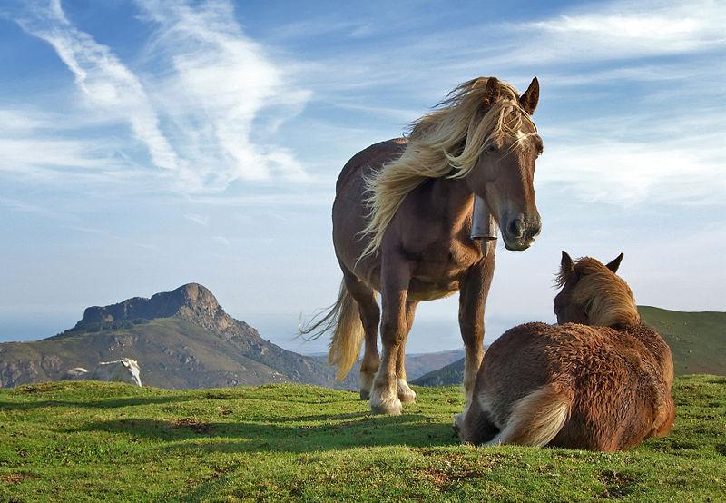 Ou voir les ipo chevaux