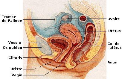 Tissu de granulation dans le vagin