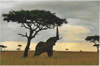 200px-Elephantreaching