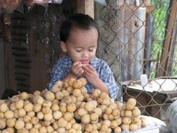 Cutest little boy eating langsat.jpg