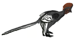 Anchiornis.png