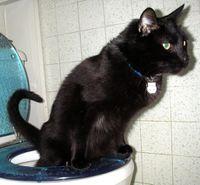 Flush Cat Litter California