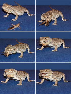 Insectivore vikidia l encyclop die des 8 13 ans - Animal qui mange les fourmis ...