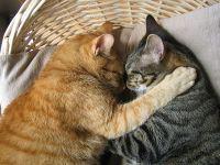 Le chat dort jusqu\u0027à 16 heures par jour.