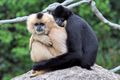Gibbons couple.jpg