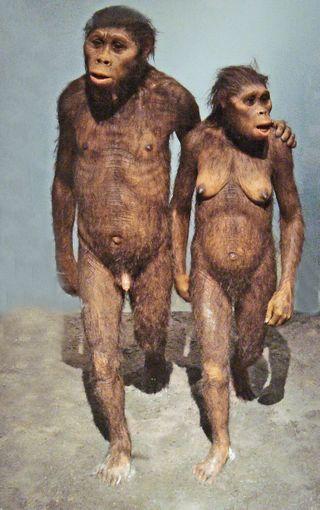 Une nouvelle espèce d'homme préhistorique plus proche de nous que Néandertal