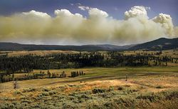 Wildfire in Yellowstone Natinal Park produces Pyrocumulus clouds1.jpg