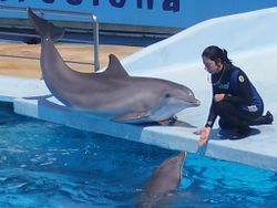 Dolphin and trainer 4.jpg