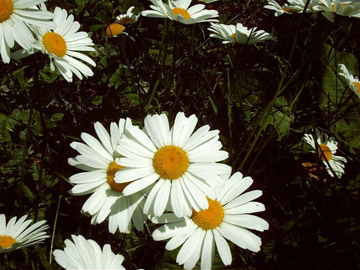 Composee Aux Fleur Decorative