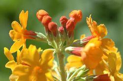 Buberel unknown flower 4.jpg