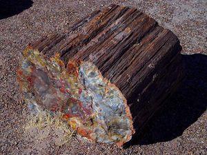 différents types de datation des fossiles